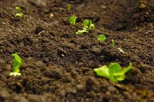 Meritano produce fresatrici, erpici, trinciatrici per ogni tipo di terreno